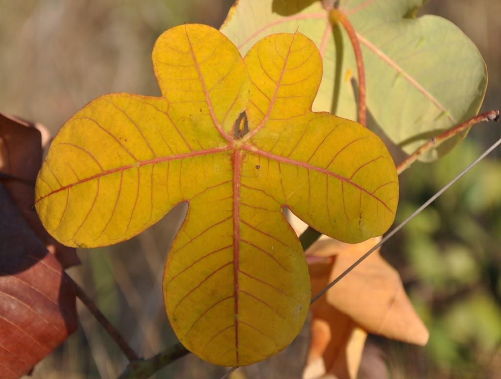 Plant leaf, Chapada dos Veadeiros National Park, Brazil.